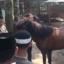 Meraih Sunnah Dengan Berkuda